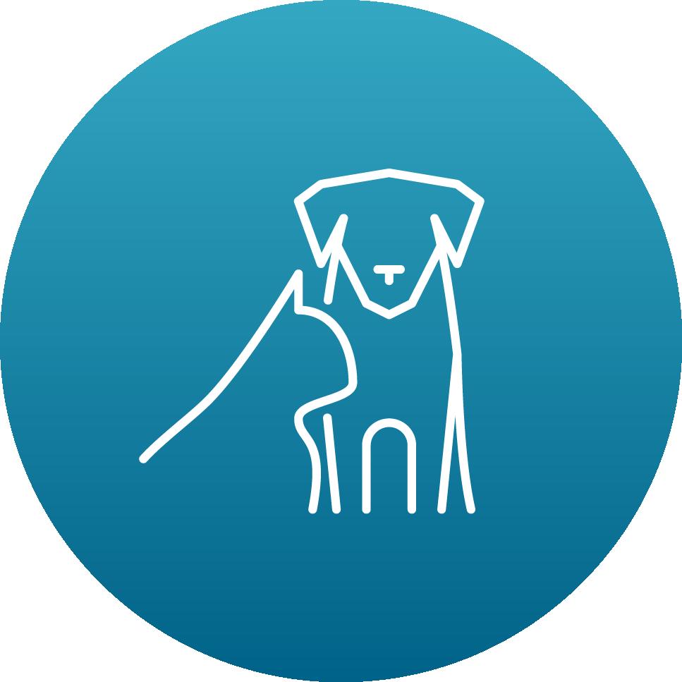 veterinary neurosurgery services